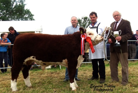 Male Champion Goulding Easy Peezy pictured with Matthew Goulding (exhibitor), Thomas Beirne (judge) & son with Martin Murphy (Munster Branch chairman)