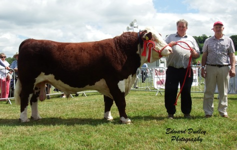 Reserve Supreme Champion - Knockmountagh Duke with Tom Roycroft (exhibitor) and Eugene Lynch (judge).