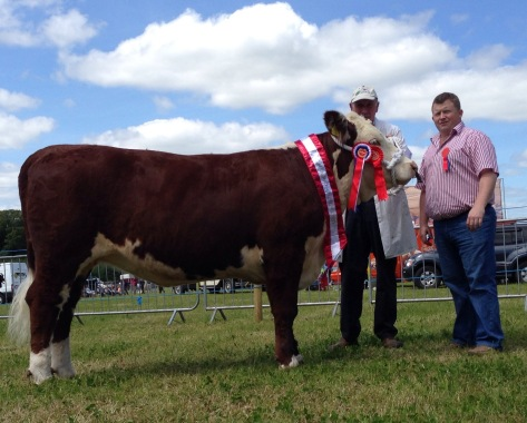 Champion Knockmountagh Cindy, owner Eamon McKiernan and Judge Niall Faughnan