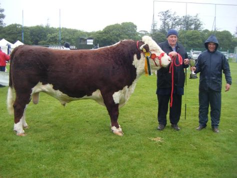 Hereford Champion Knockmountagh Duke with owner Tom Roycroft and judge Michael Molloy