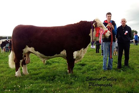 Supreme Hereford Champion - Knockmountagh Duke with Niall Roycroft (handler) and Edward Jeffrey (judge)