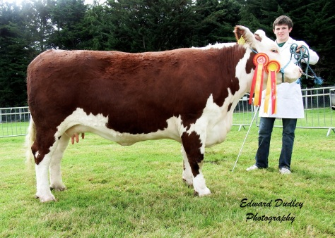 Supreme Hereford Champion - Lakelodge Kathy 5 with Glenn Dudley (exhibitor)