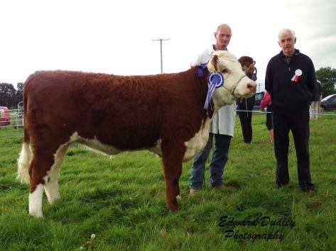 Reserve Champion - Gurteragh Nico with Jim Kingston (exhibitor) and Edward Jeffrey (judge)