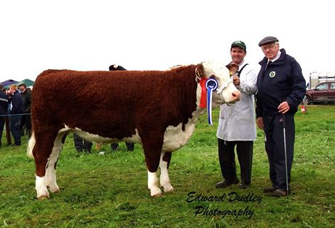 Reserve Hereford Champion 'Gouldingpoll 1 Duchess 591' with Matthew Goulding (exhibitor) and Martin Murphy (judge)