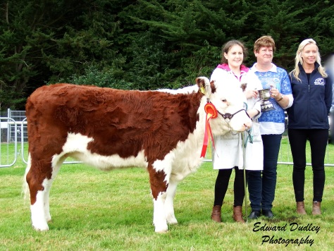 Junior Hereford Calf Champion - Lakelodge Lass Una 4 with Susan Dudley (handler), Kathleen O' Brien (sponsor) and Mags Melody (judge)