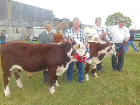Champion (Grianan Orange 589) and reserve champion (Knockduff Poll 1 Ginger ET) Hereford with the judge for the day Mr. Tom Fitzgerald