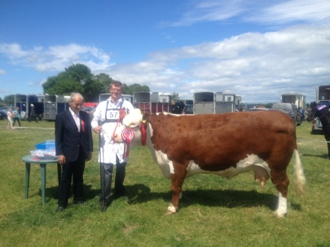 Champion Hereford at Gorey show: Tourtanepoll1 Diamond with Mervyn Parr and Tom Murphy (Judge)