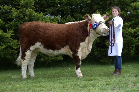 Reserve Champion: Ardmulchan Clover 610 Owner Catherine Smyth