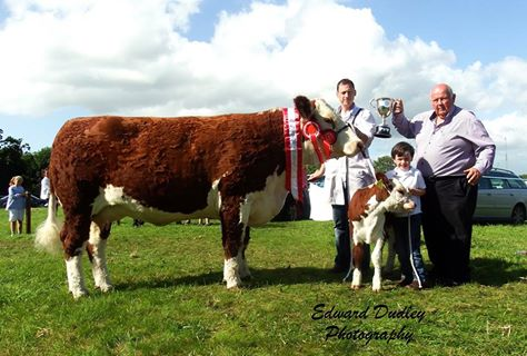 Supreme Hereford Champion - 'Griananpoll 1 Orange 661' with Anselm Fitzgerald (exhibitor), Dara Fitzgerald (handler) and Henry Dudley (senior steward, Nenagh Show)