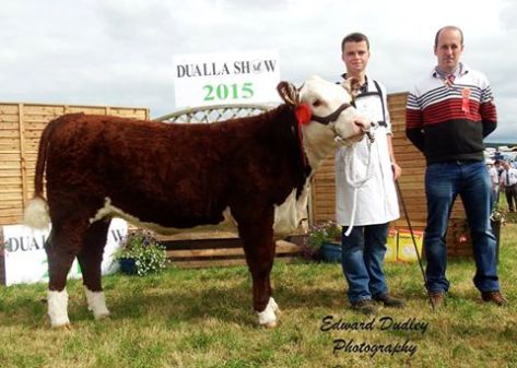 Reserve Hereford Champion 'Gouldingpoll 1 Lucy 641' with Darragh Goulding (handler) and Eustace Burke (judge)
