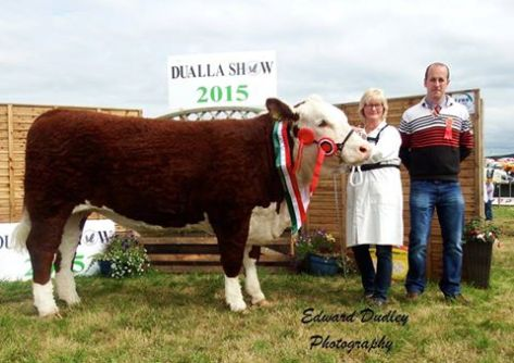 Supreme Hereford Champion 'Gouldingpoll 1 Duchess 591' with Rita Goulding (handler) and Eustace Burke (judge)