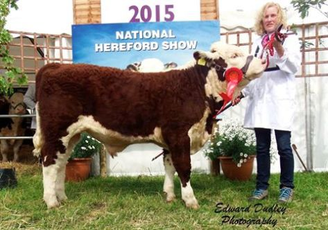 1st prize winner, Junior Hereford bull calf - Millbawn Atticus ET with Sandra Bogan (exhibitor)