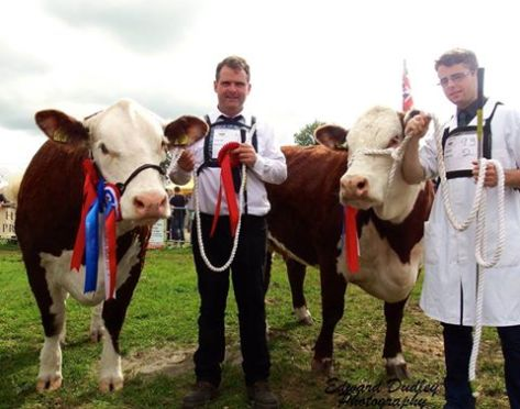 Best Pair of Herefords - Gouldingpoll 1 Duchess 591 and Gouldingpoll 1 Duchess 548 with Matthew & Jack Goulding (exhibitors)