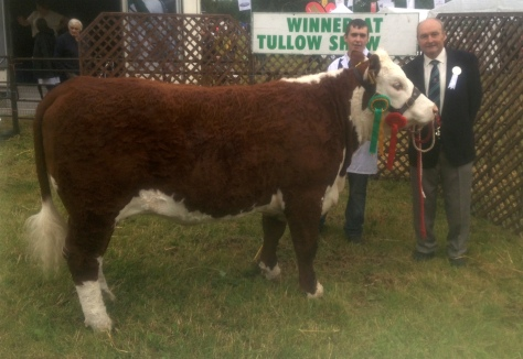Reserve Champion 'Grianan Copperobin N679' with Niall Jones and Mr. Patrick Sheedy (Judge)