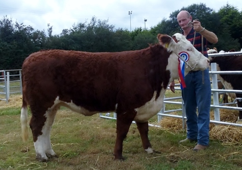 2 Reserve Hereford Campion - Gurteragh Nico - Jim Kingston