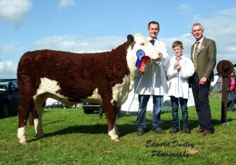 Reserve Hereford Champion - 'Clouncagh Joanne 4' with John O' Connor (exhibitor), Jack O' Connor and Robin Irvine (judge)