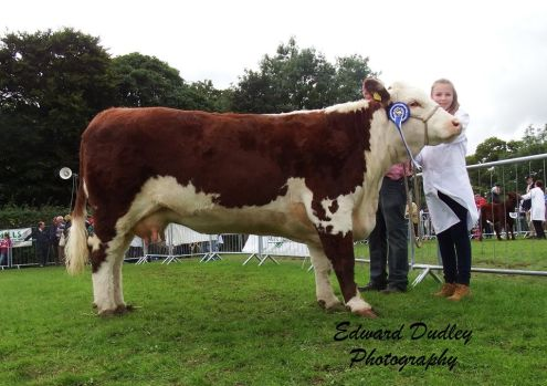 Reserve Munster Senior Female of the Year 2015 - Corlismorepoll 1 Sydney 607 with Gerry  & Ciara McNamara (exhibitors)