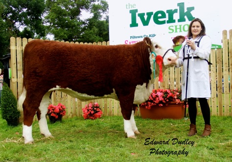 Reserve Supreme Champion - 'Gouldingpoll 1 Duchess 591' with Susan Dudley (handler)