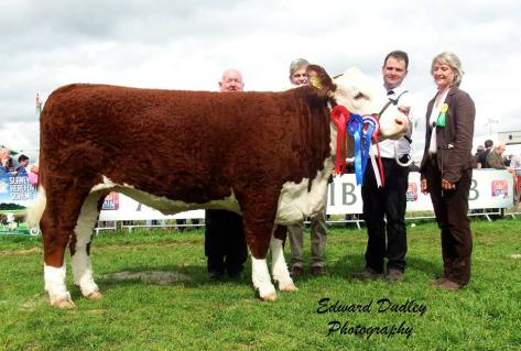 Reserve Supreme Hereford Champion & Overall Female Champion - Gouldingpoll 1 Duchess 591 with John Neenan (IHBS President), Matthew Goulding (exhibitor) and Hazel Timmis (judge)