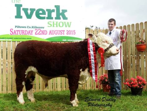 South Leinster Bull calf of the Year 2015 - 'Knockduffpoll 1 Ginger' with Niall Jones (exhibitor)