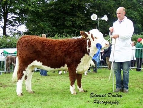 Reserve Munster Junior Female of the Year 2015 - River Rock Eva Bea with Tony Hartnett (exhibitor)