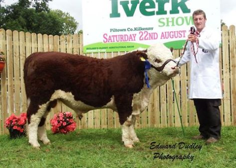 Reserve South Leinster Bull calf of the Year 2015 - 'Clonroe Denis' with Aidan Jones (exhibitor