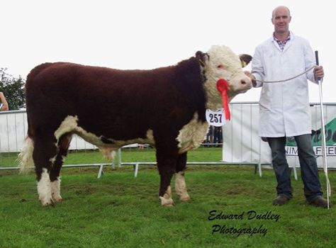 Munster Junior Bull of the Year 2015 - River Rock Tyson with Tony Hartnett (exhibitor)