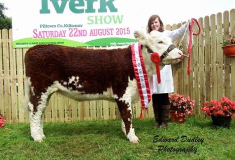 South Leinster Heifer calf of the Year 2015 - 'Knockduffpoll 1 Emma Jane' with Fiona Jones (exhibitor)