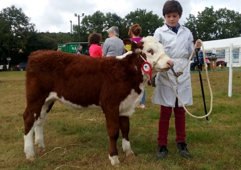5 Young Handler Winner - PJ Moloney