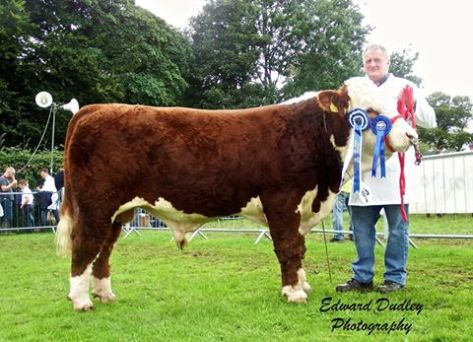 Reserve Munster Junior Bull of the Year 2015 - Gurteragh Obama with Michael O' Keeffe (exhibitor)