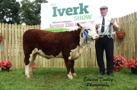 Reserve South Leinster Heifer calf of the Year 2015 - 'Tourtane Queen Lorraine' with Henry Parr (exhibitor)