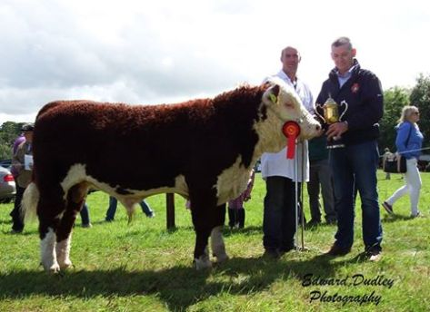 1st prize winner, Intermediate bull calf - 'River Rock Tyson' with Tony Hartnett (exhibitor) and Michael Cleary (Irish Hereford Prime, sponsor)