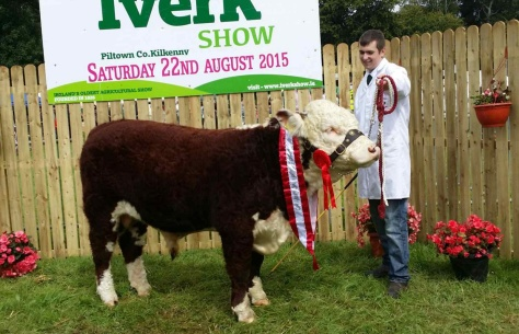 Champion Male 'Knockduffpoll1 Ginger' with Niall Jones, exhibitor