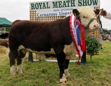 Bull Calf Champion Mount Williams Indurain owner Aidan Farrel