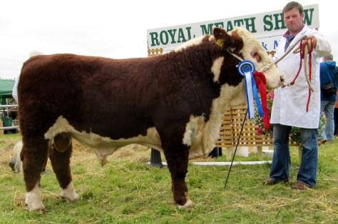 1st PrizewReserve Bull Calf Champion Corlismorepoll 1 Keynote