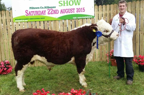 Reserve Champion Male 'Clonroe Denis' with Aiden Jones exhibitor