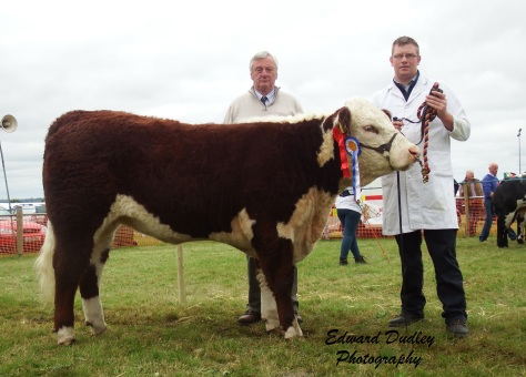 Reserve Hereford Champion 'Tourtanepoll 1 Sara 869' with Mervyn Parr (exhibitor) and Seamus Neary (judge)