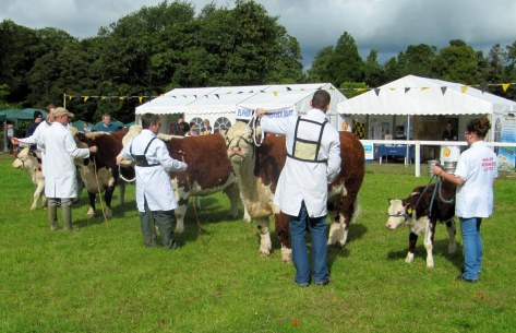 Cow Class Right to left 1st Griananpoll 1 Orange 662, 2nd Kilsunny Doreen's Ivy and  3rd Cloonfree Rosie