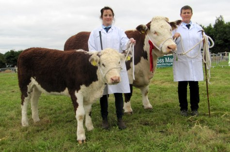 Kilsunny Doreen's Ivy winner cow class with owner Christine Drumm and Ivy's calf shown by