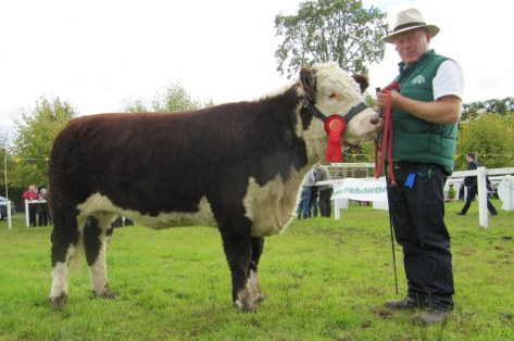 1st prizewinner Kye Sheila 679 shown by Padraig McGrath