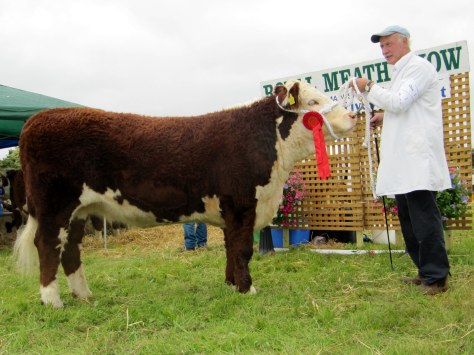 Knockmountagh Cindy with exhibitor Eamon McKiernan