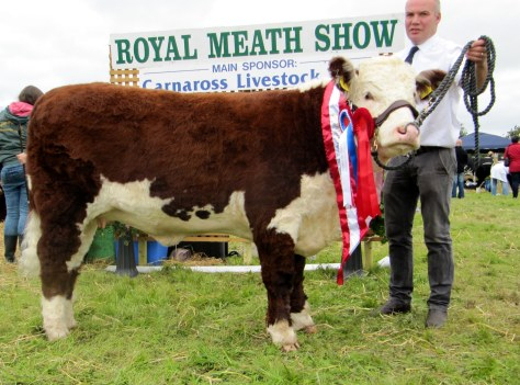 Heifer Calf Champion Moyclare Rose 12th with Michael Molloy