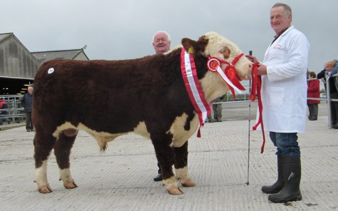 Champion Hereford Gurteragh Obama €3,300 with John Neenan Show judge and President IHBS with Michael O'Keeffe