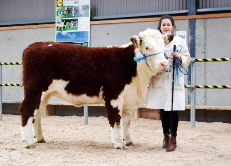 Lakelodge Lass Una 3rd with Susan Dudley €4,200