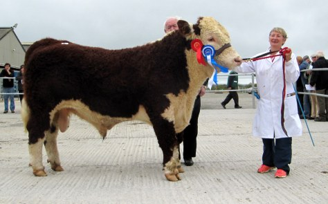 Reserve Champion Fortregal Jonah with Judge John Neenan and owner Sheila Lucey €3,000