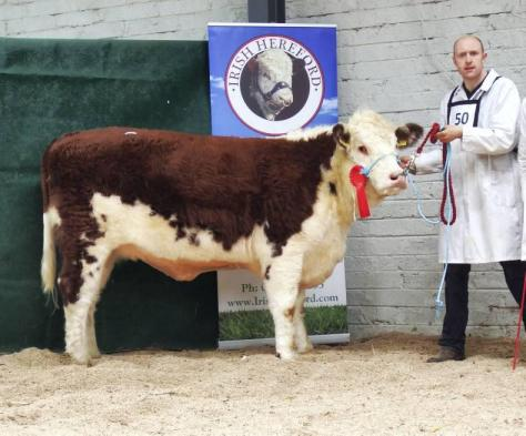 Caonach Sandra with David Jones purchased by Nelson McCrabbe at €3,400