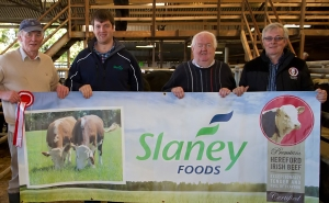 Judge Doni Mullins accepts the prize on behalf of Tom larkin, Ardagh, Co. Limerick, on gaining the top place in the Heifer section of the Hereford Society Store Cattle Show and Sale in Golden Vale Mart, Kilmallock, Co. Limerick. Also in pic: Denis Brennan, Slaney Foods (sponsors) John Neenan, President Irish Hereford Society and Liam Philpott, Irish Hereford Society. Photo Ita West