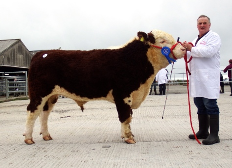Top Price bull at €3,400 Gurteragh Superking with Michael O'Keeffe