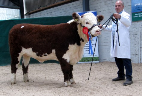 Reserve Female Champion Moyclare Rose 26th, Michael Molloy to Gerry McNamara.