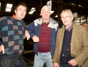 Martin Shelton, Ballingarry, William Reidy, Milford and Dan Shelton, Castletown in Golden Vale Mart, Kilmallock last Monday for the Irish Hereford Society Store Cattle show and Sale photo Ita West